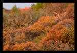 Spines And Autumn Colors Still In Summer by skarzynscy
