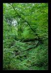 Deep In The Woods by skarzynscy