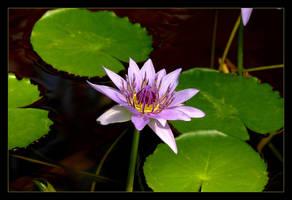 Perfect Purple by skarzynscy