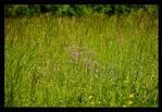 Spring Mountain Meadow by skarzynscy