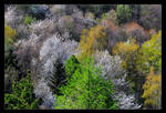 Early Spring Forest Colors by skarzynscy