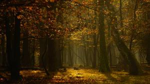 Halloween Forest