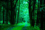 Mystical Green