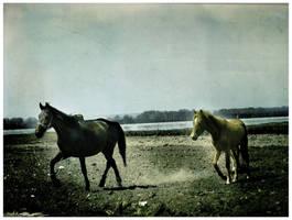 horses by menduza