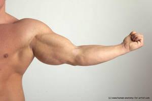 Zoltan - arm, muscles