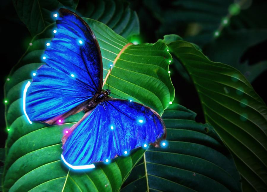 Blue Morpho LED by operian