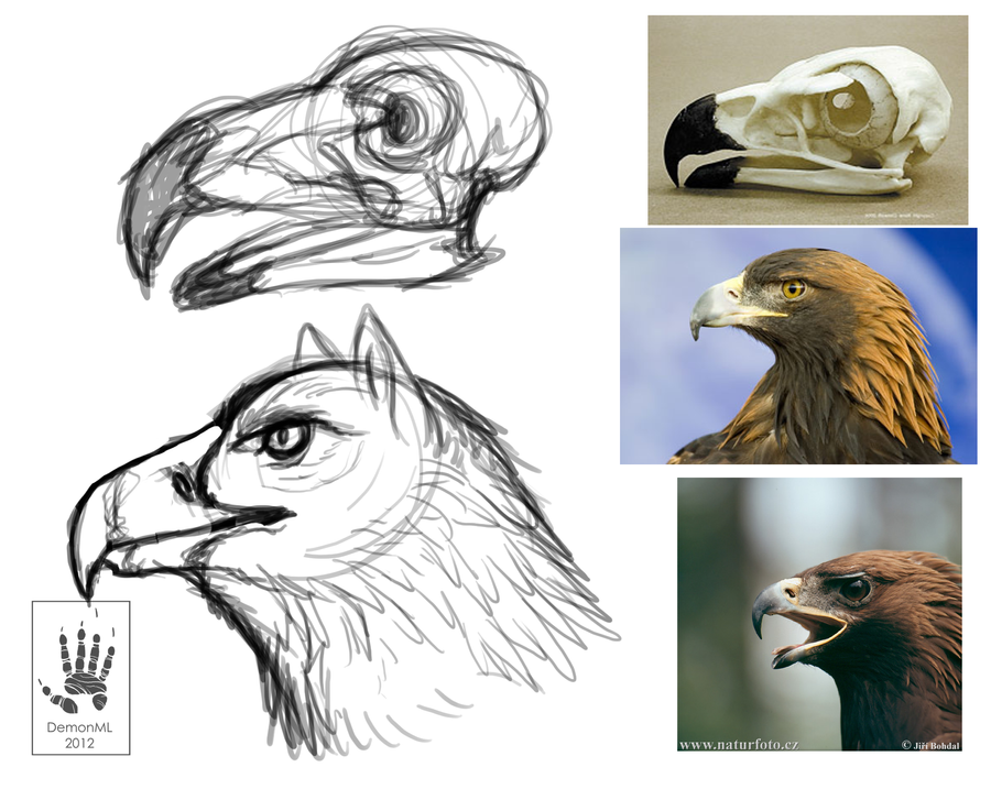 Eagle sketch by DemonML