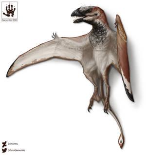 NOTDinovember: Dimorphodon Specimen