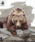 Chill Bear