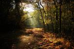 Autumn - Darkness to Light