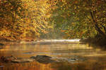 Autumn - Morning Mist