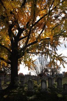 Autumn - Green Mount I
