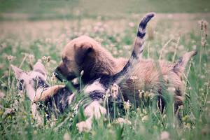 Friends by SilverPK
