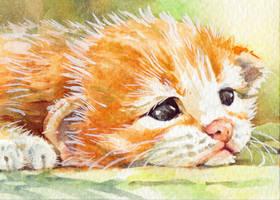 Cute Animal4-4 by t-wara