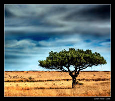 Bluest Above The Tree by BenHeine