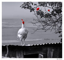 Tender Chicken by BenHeine