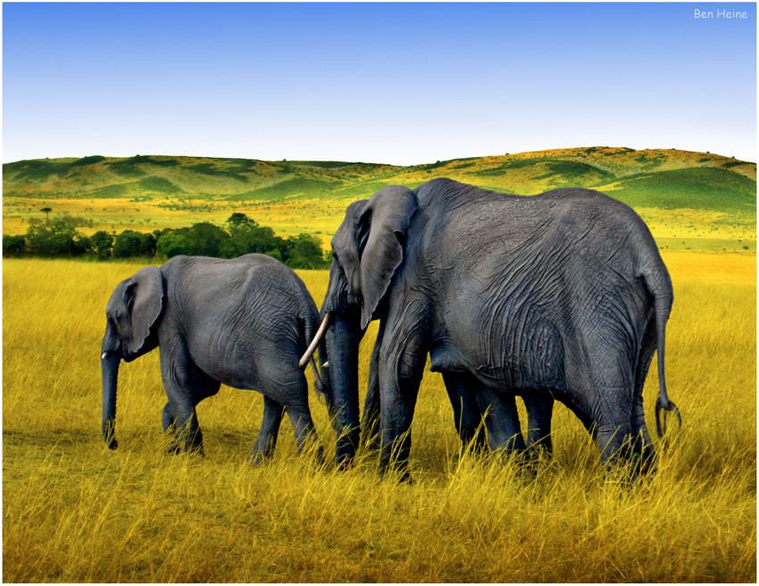 Elephant Parade by BenHeine