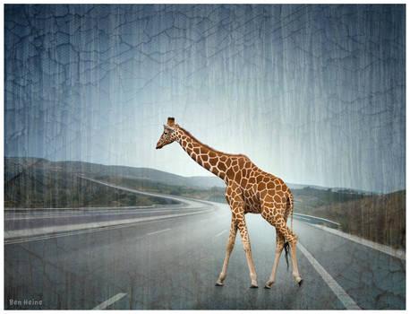 Lost Giraffe on the Highway by BenHeine