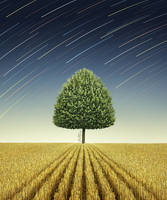 Newton's Apple Tree by BenHeine