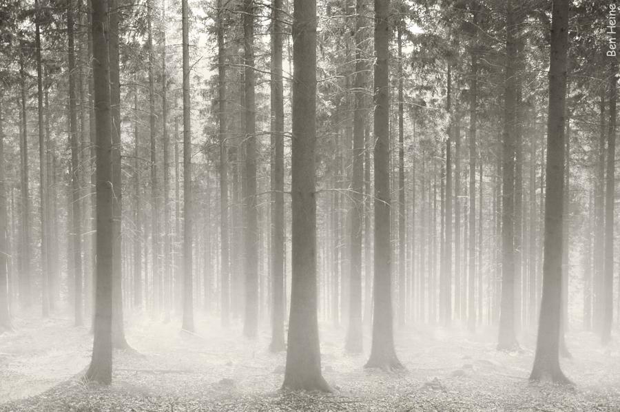 Polish Forest by BenHeine