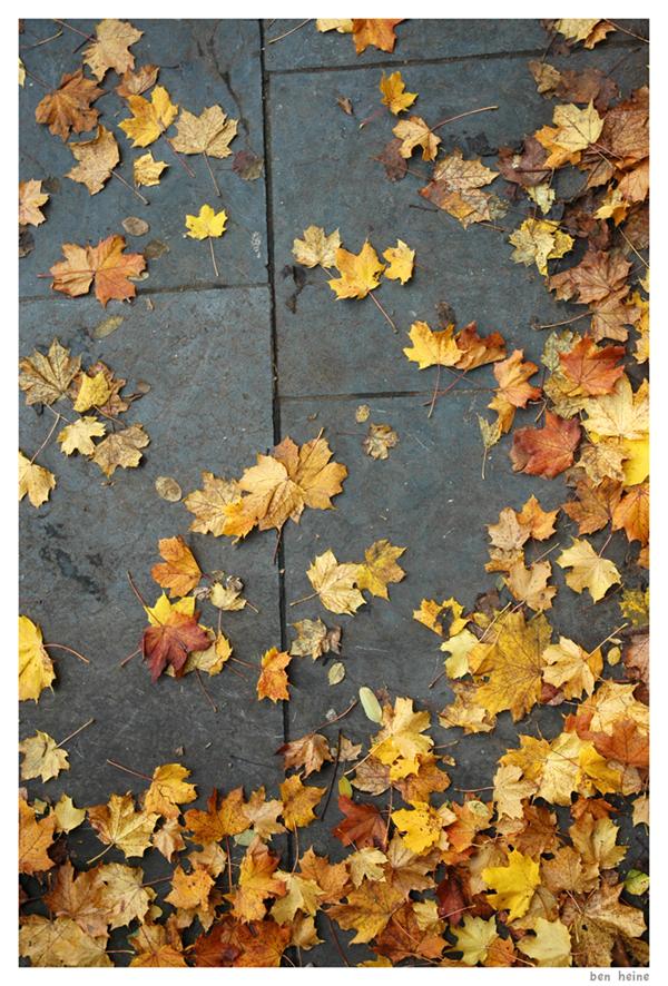 Dead Leaves by BenHeine