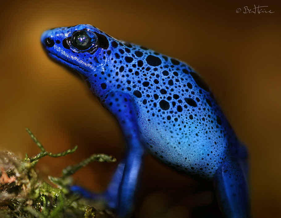 Bluetiful by BenHeine