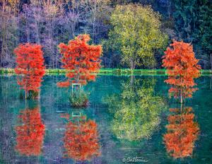 Autumn in Chevetogne
