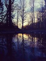 Dark Forest by BenHeine