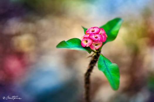 Cute Flower - Ben Heine Photography