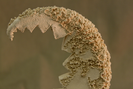 Moon Moss (close up) by SuperMiniGigi