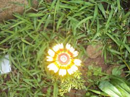 Flower by mazeko