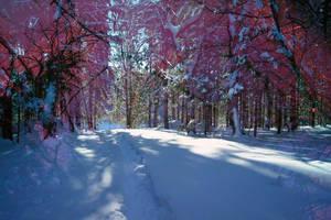 polychrome#forest