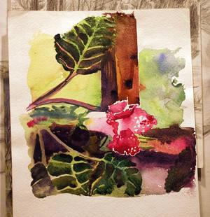 etude watercolor