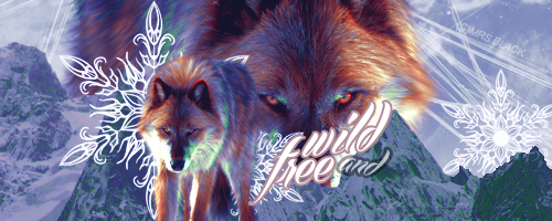 Wolf by Ruda9