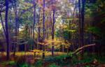 Woodland Trail 02