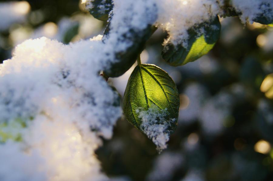 Winter Sun by amazingdeadpool