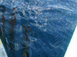 Spider on the Water