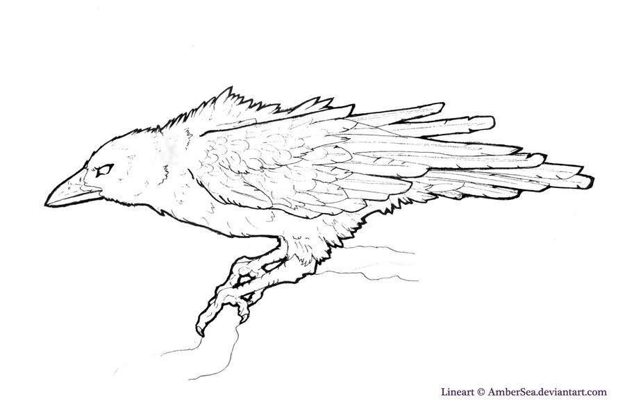 Line Drawing Raven : Raven crow free lineart by ambersea on deviantart