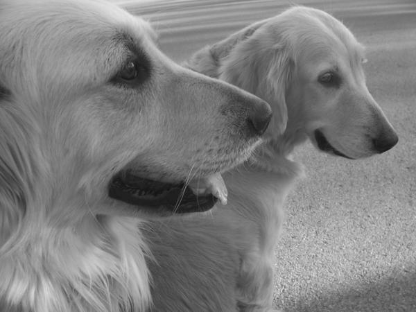 My golden girls by Kalsimage