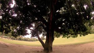 Quinta da Boa Vista 6