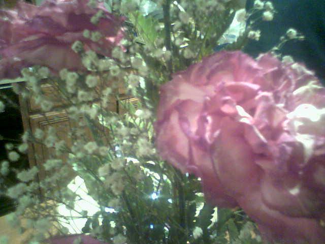 Flower Closeup by kuroinami
