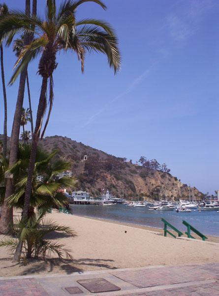 Catalina4 by kuroinami