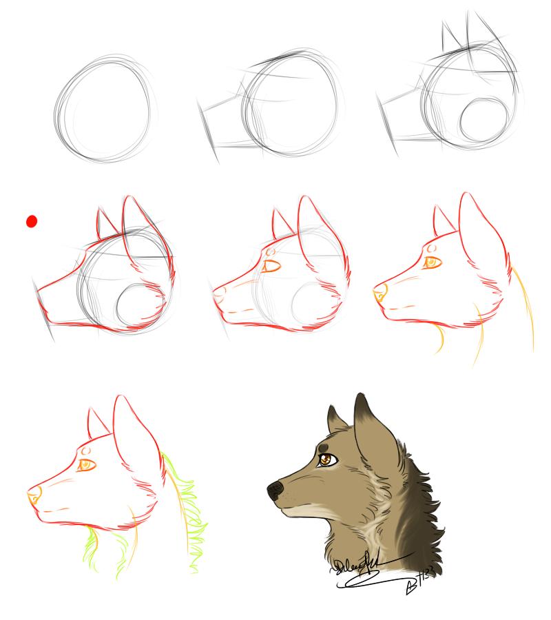 (Tutorial) Basic Canine Headshot by LindsayPrower