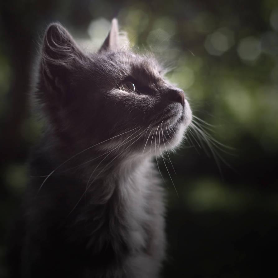 Feline by wewe18