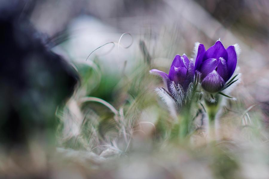 In Wonderland... by wewe18
