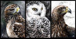 Birds of prey by Kirsch-vanderWit