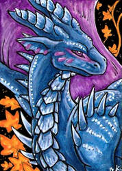 Selianth aceo