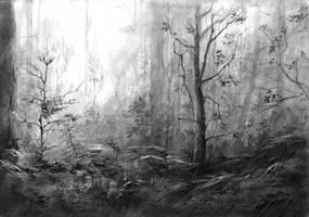 Misty  forest by amilanowska