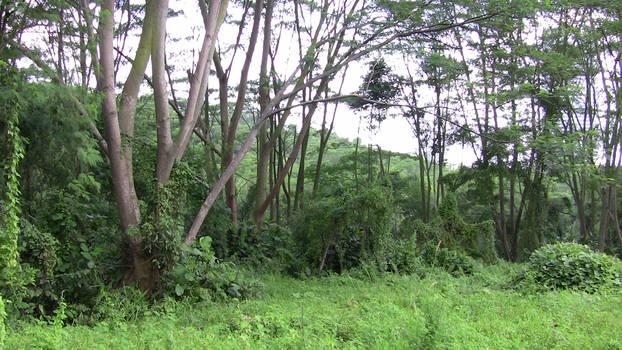 Earth Trail 1