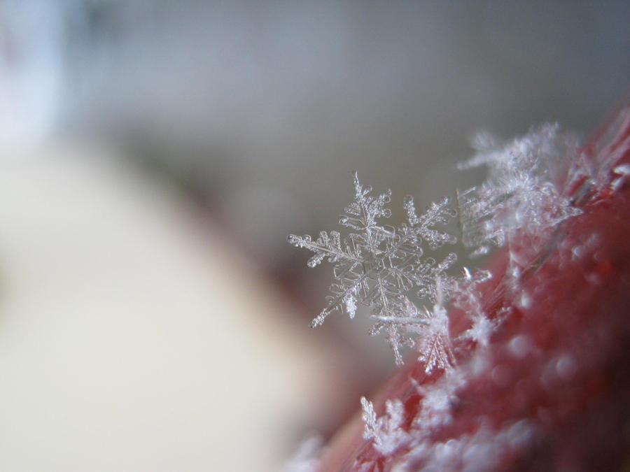 pretty snowflake by msMIM